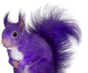 half a purple squirrel